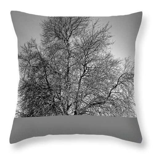 Black And White Throw Pillow featuring the photograph Discovery Park No.1 by David Patterson