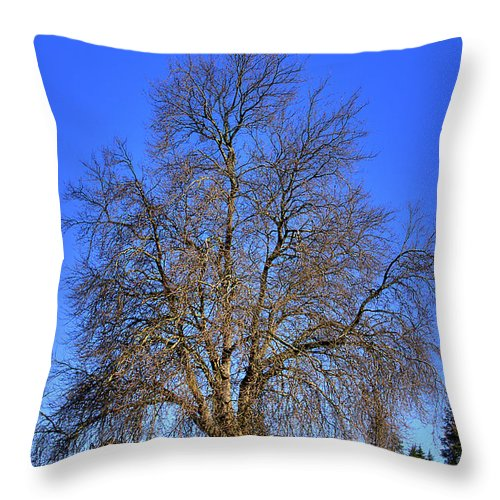 Photo Throw Pillow featuring the photograph Discovery Park No.4 by David Patterson