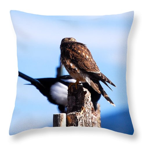 Wildlife Throw Pillow featuring the photograph Disputed Perch by Rupert Chambers