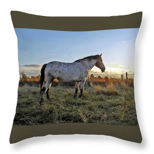 Appaloosa Throw Pillow featuring the photograph Distant Thoughts by Susan Baker
