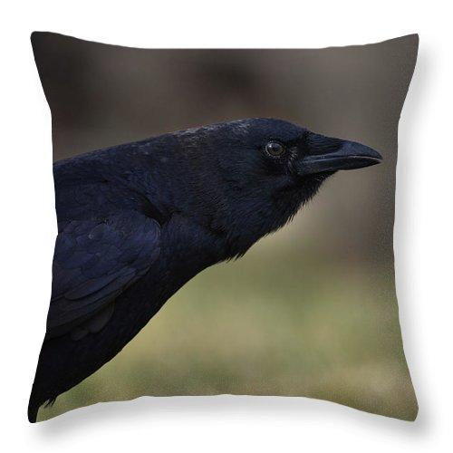 Crow - Rae Ann M. Garrett - Photography - Images Of Crows - Corvids- Mother Crow- For People Who Love Crows - Crow Lovers - International Known Artist - Professional Artists- Throw Pillow featuring the photograph Distinctly by Rae Ann M Garrett