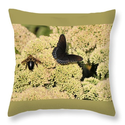 Butterfly Throw Pillow featuring the photograph Diversity by Michelle DiGuardi