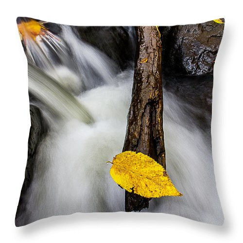 Our Little Streams Supply Us With Alot Of Photographic Opportunities Here In Northern Minnesota. Throw Pillow featuring the photograph Diving Board by Jamie Rabold