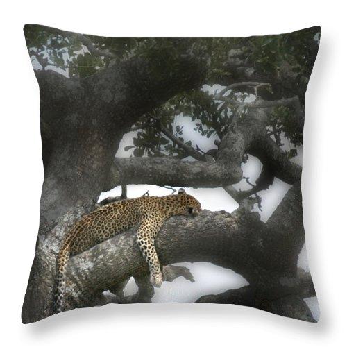 Leopard Throw Pillow featuring the photograph Do Not Disturb by Joseph G Holland