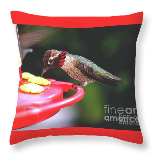 Male Throw Pillow featuring the photograph Do You Like My Snood by Jay Milo