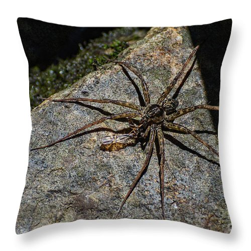 Spiny Throw Pillow featuring the photograph Dock Spider by Les Palenik