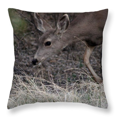 Deer Throw Pillow featuring the photograph Doe Carefully Grazing In Tombstone by Colleen Cornelius