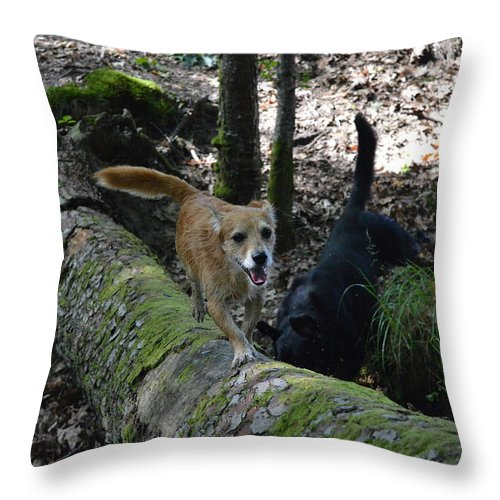 Forest Scene Throw Pillow featuring the photograph Dog On A Log by David Dand