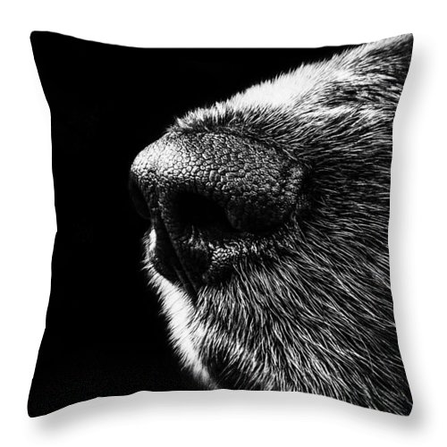 Dog Art Throw Pillow featuring the painting Dog Smeller by Queso Espinosa