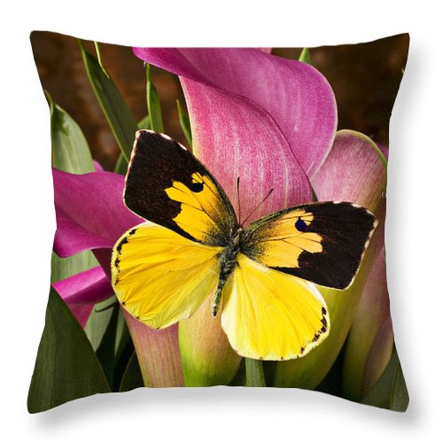 Butterfly Throw Pillow featuring the photograph Dogface Butterfly On Pink Calla Lily by Garry Gay