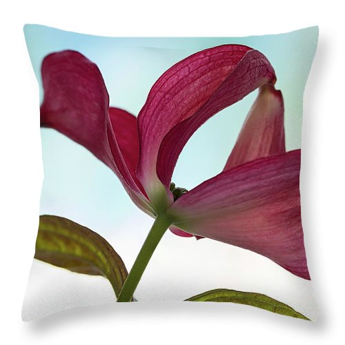 Floral Throw Pillow featuring the photograph Dogwood Ballet 3 by Shirley Mitchell