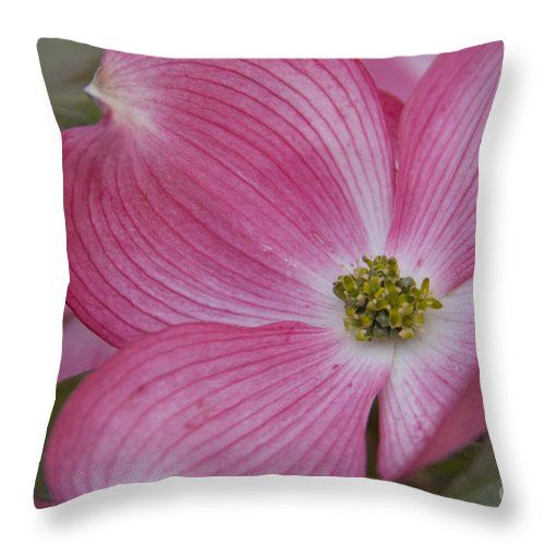 Dogwood Throw Pillow featuring the photograph Dogwood Bloom by Idaho Scenic Images Linda Lantzy