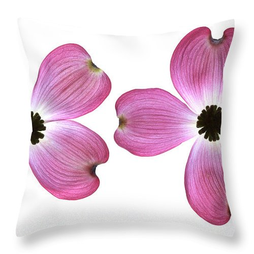 Genus Cornus Throw Pillow featuring the photograph Dogwood Flowers by Tony Cordoza