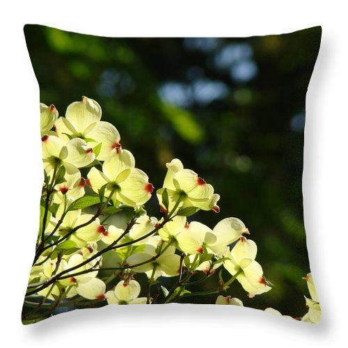 Dogwood Throw Pillow featuring the photograph Dogwood Flowers White Dogwood Tree Flowers Art Prints Cards Baslee Troutman by Baslee Troutman