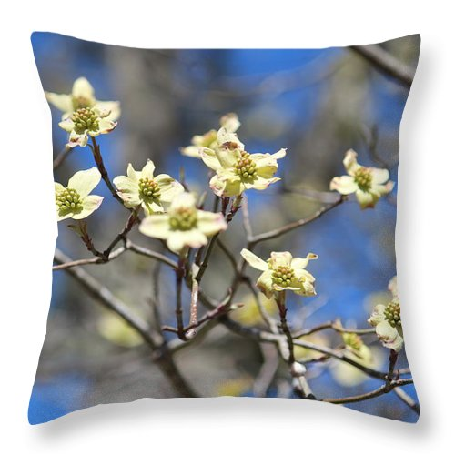 Dogwood Flower Throw Pillow featuring the photograph Dogwood In Bloom by Cynthia Guinn