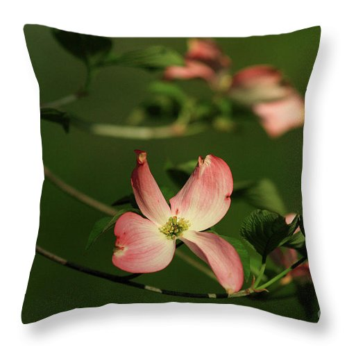 Dogwood Throw Pillow featuring the photograph Dogwood In Pink by Douglas Stucky