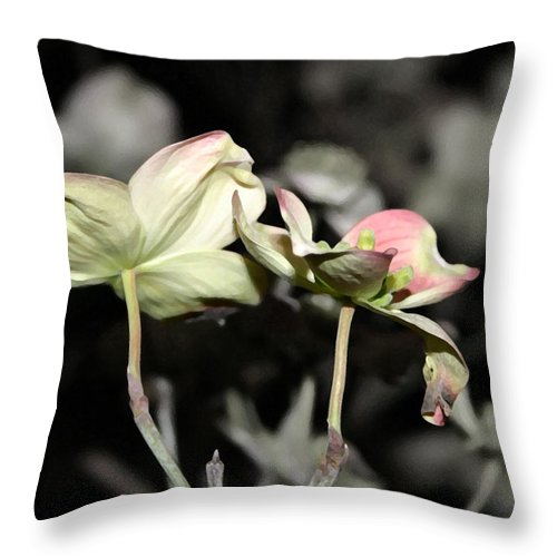 Dogwood Throw Pillow featuring the photograph Dogwood by Mary Haber