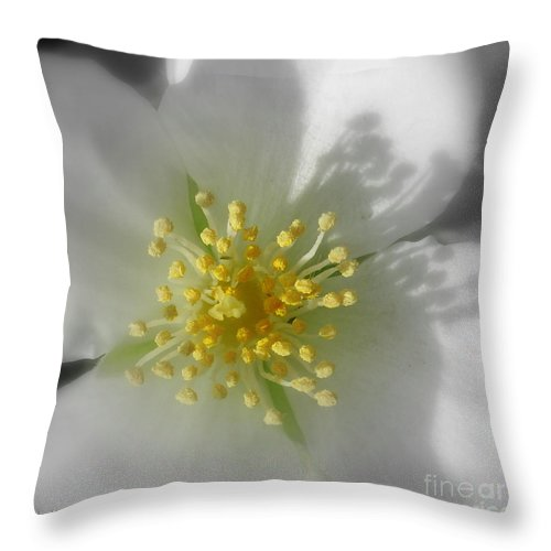 Photography Throw Pillow featuring the photograph Dogwood by Shelley Jones