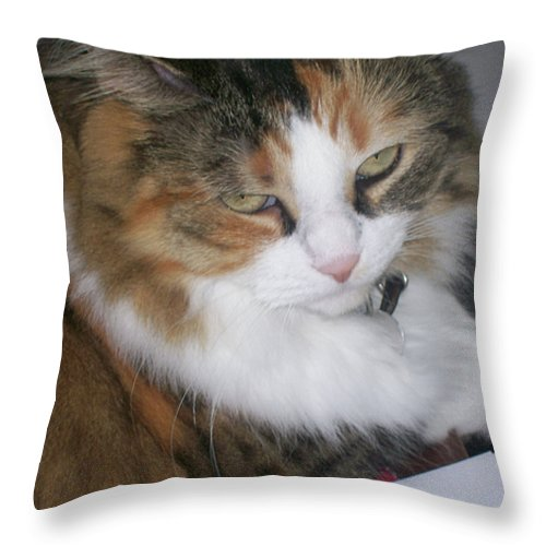 Animal Throw Pillow featuring the photograph Dolly The Grumpy Cat by Corinne Elizabeth Cowherd