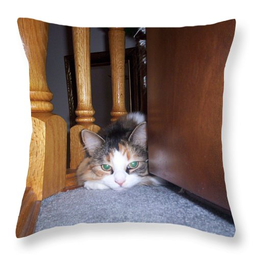 Animal Throw Pillow featuring the photograph Dolly The Pouting Cat by Corinne Elizabeth Cowherd