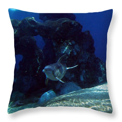Dolphin Fish Aquatic Life Water Aquarium Sea Sandy Shore Rock Reef Throw Pillow featuring the photograph Dolphin by Andrea Lawrence