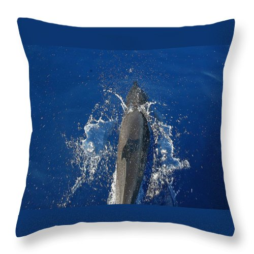 Dolphin Throw Pillow featuring the photograph Dolphin by J R Seymour