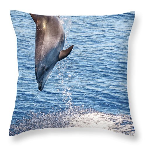 Dolphin Throw Pillow featuring the photograph Dolphin Jump by Cory Huchkowski