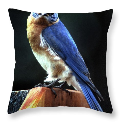 Bird Throw Pillow featuring the photograph Dominator by Skip Willits