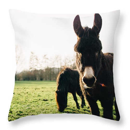 Winter Throw Pillow featuring the photograph Donkey And Pony by Pati Photography