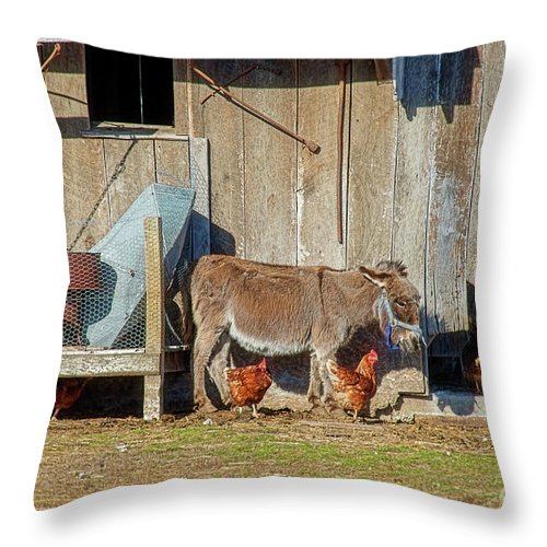 Donkey Throw Pillow featuring the photograph Donkey Goat And Chickens by David Arment