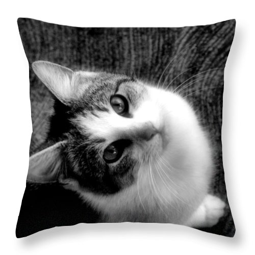 Cat Throw Pillow featuring the photograph Don't Ever Leave by Gaby Swanson