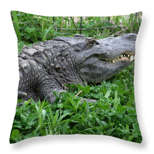 Animal Throw Pillow featuring the photograph Don't Let This Smile Fool You by David Dunham