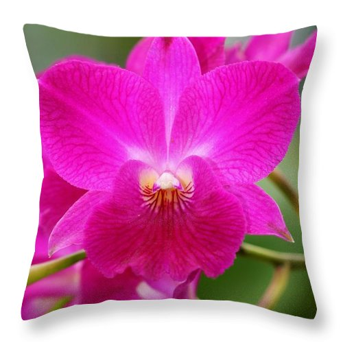 Orchid Throw Pillow featuring the photograph Dendrobium Orchid 2 by Kristina Jones