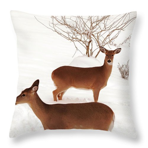 Deer Throw Pillow featuring the photograph Double Trouble by Lori Tambakis