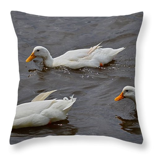 Ducks Throw Pillow featuring the photograph Down Covered Cruisers by Laura Leigh McCall