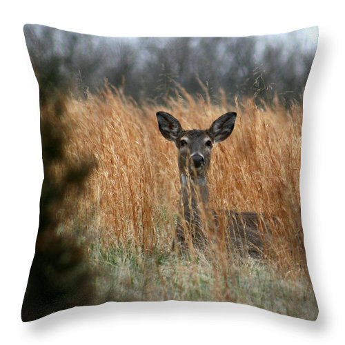 Animal Throw Pillow featuring the photograph Down For The Night by David Dunham