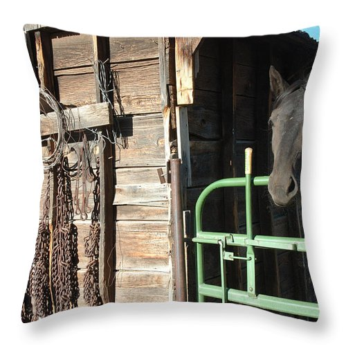 Horse Throw Pillow featuring the photograph Down On The Ranch by Jerry McElroy