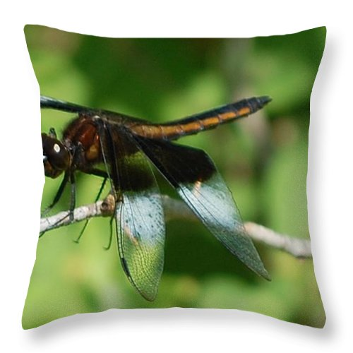 Digitall Photo Throw Pillow featuring the photograph Dragon Fly by David Lane