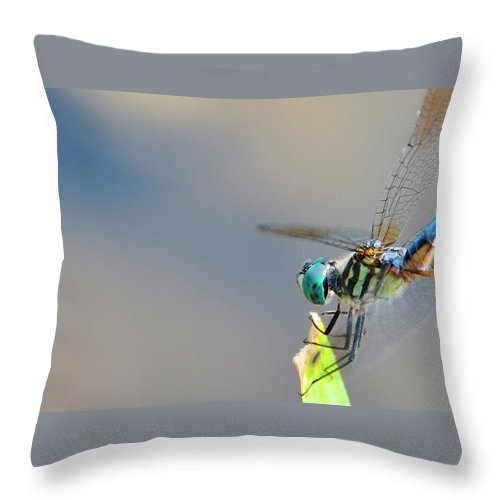 Insect Throw Pillow featuring the photograph Dragon Flyer by David Arment