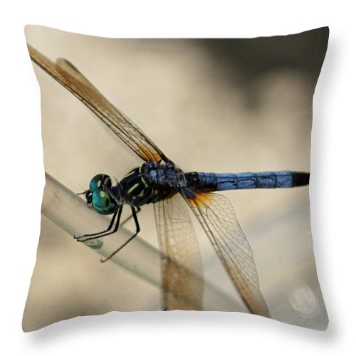 Dragonfly Throw Pillow featuring the photograph Dragonfly Abstract by Suzanne Gaff