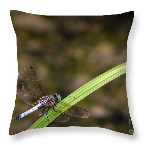 Dragonfly Throw Pillow featuring the photograph Dragonfly by Amanda Barcon