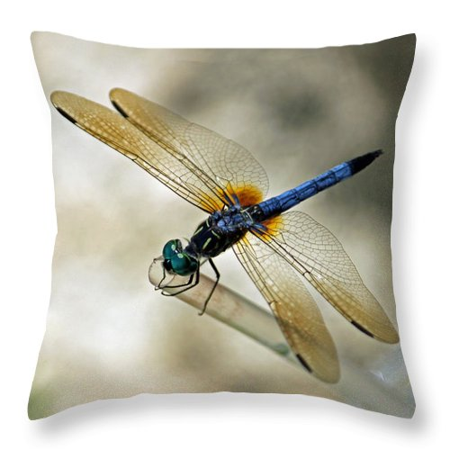Dragonfly Throw Pillow featuring the photograph Dragonfly Dreams by Suzanne Gaff