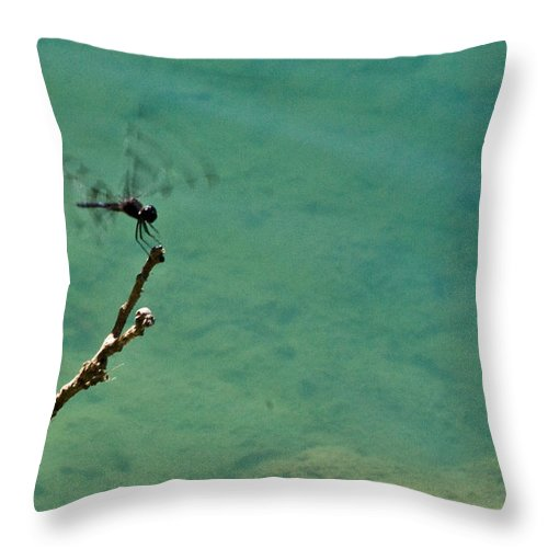 Dragonfly Throw Pillow featuring the photograph Dragonfly Exercising Wings by Douglas Barnett