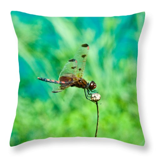 Dragonfly Throw Pillow featuring the photograph Dragonfly Hanging On by Douglas Barnett
