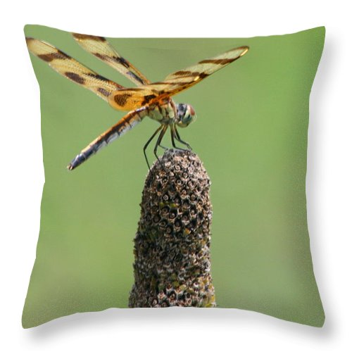 Dragonfly Throw Pillow featuring the photograph Dragonfly by Lynn Chatman