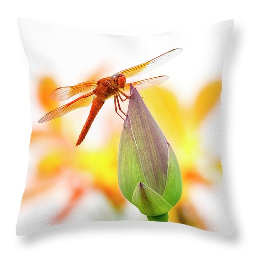 Dragonfly Perch Throw Pillow featuring the photograph Dragonfly Perch by Wes and Dotty Weber