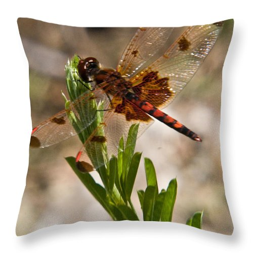 Dragonfly Throw Pillow featuring the photograph Dragonfly Resting 2 by Douglas Barnett
