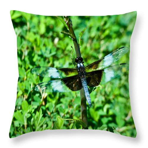 Dragonfly Throw Pillow featuring the photograph Dragonfly Resting On Stem by Douglas Barnett