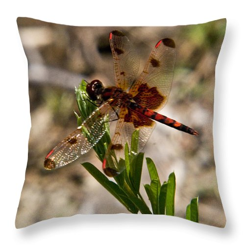 Odonata Throw Pillow featuring the photograph Dragonfly Resting On The Green by Douglas Barnett