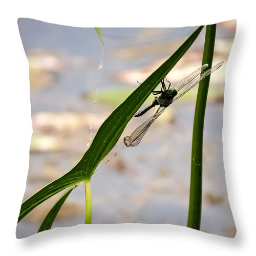 Dragonfly Resting Upside Down Throw Pillow featuring the photograph Dragonfly Resting Upside Down by Cynthia Woods